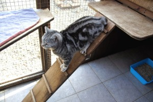 Cat Playing on Ladder at Toton Cattery