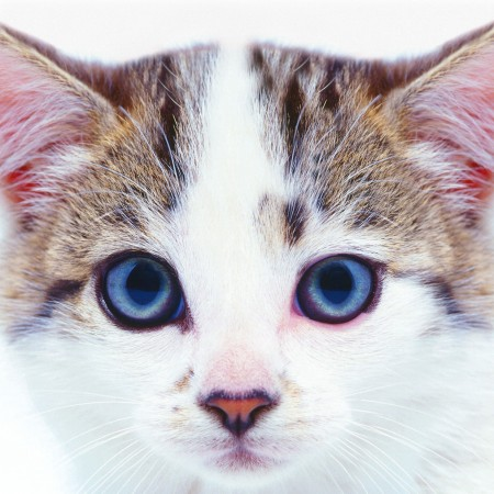 Cute-Cat-at-Toton-Boarding-Cattery-Nottingham