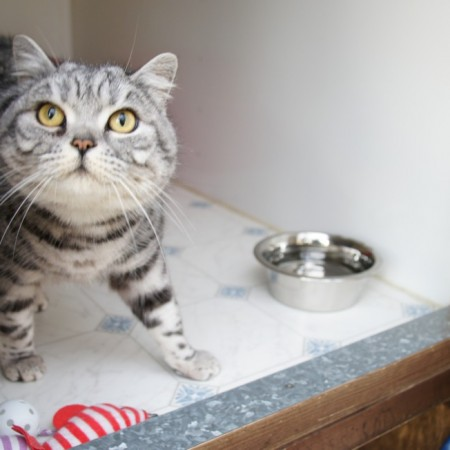 Cute cat looking up in their cosy pen at Toton Cattery