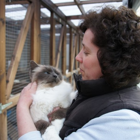 Owner of Toton Cattery Sue Stroking Miko