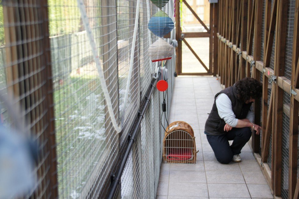 Susan Preparing for Feeding Time at Toton Cattery